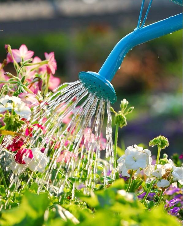 Watering Pic - Copy